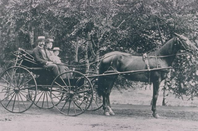 A horse and buggy in Forest Park