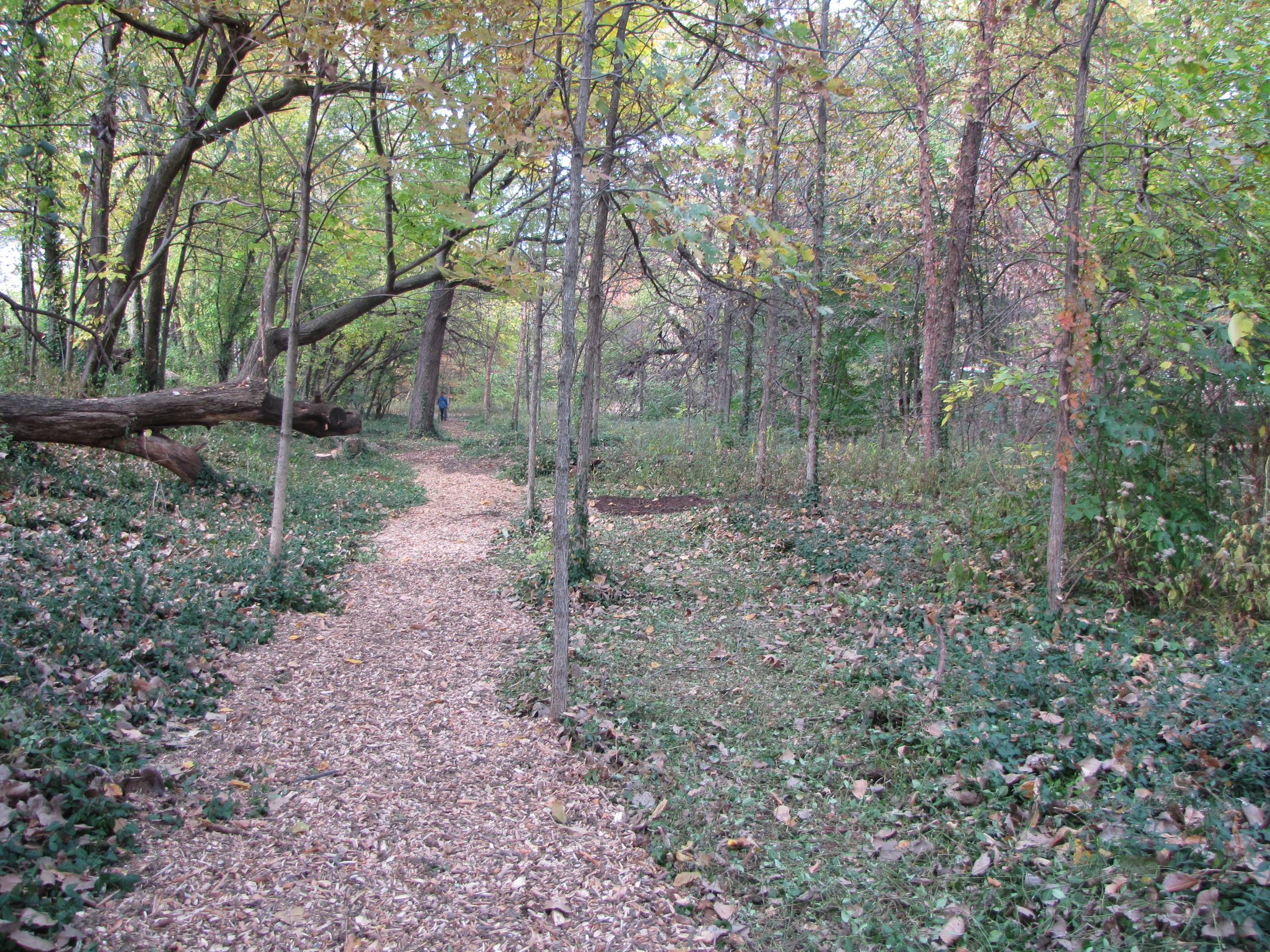 A view of the new trails