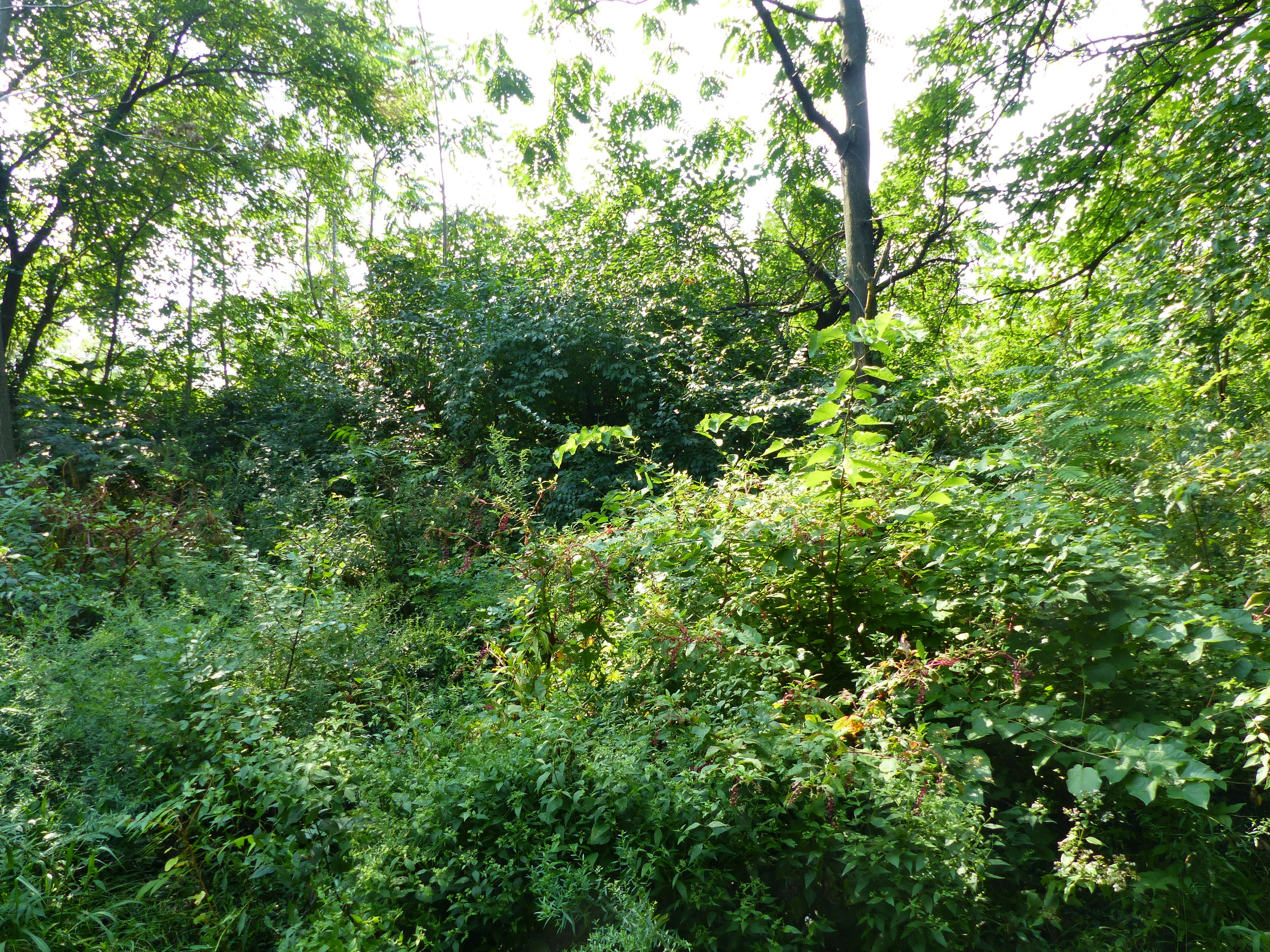 The area prior to the trails being created