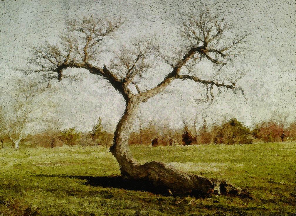 michaeleastman-forestparkforever-2.jpg