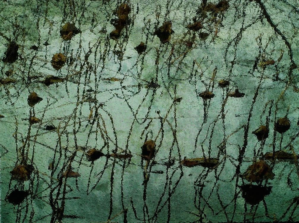 michaeleastman-forestparkforever-11.jpg