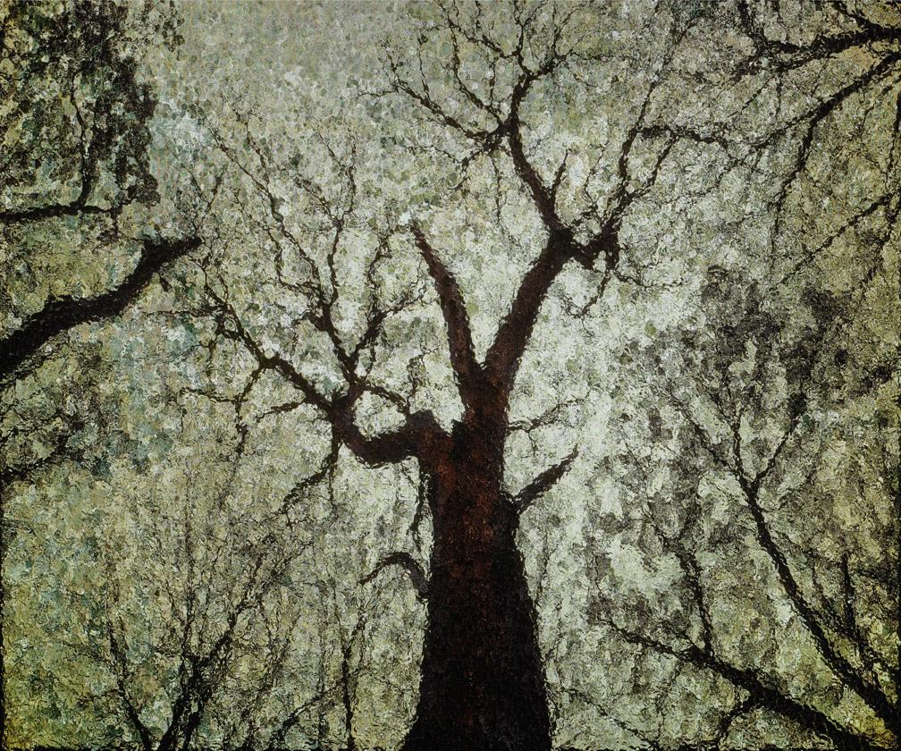 michaeleastman-forestparkforever-13.jpg