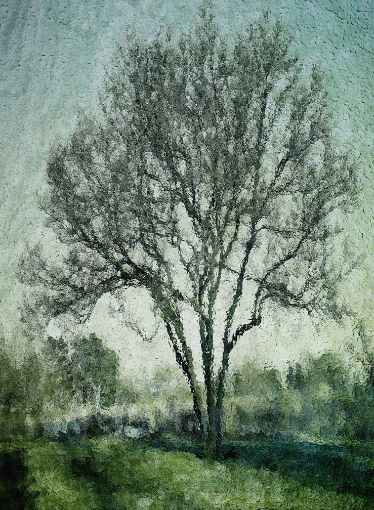 michaeleastman-forestparkforever-18.jpg