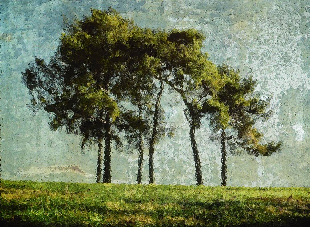 michaeleastman-forestparkforever-31.jpg