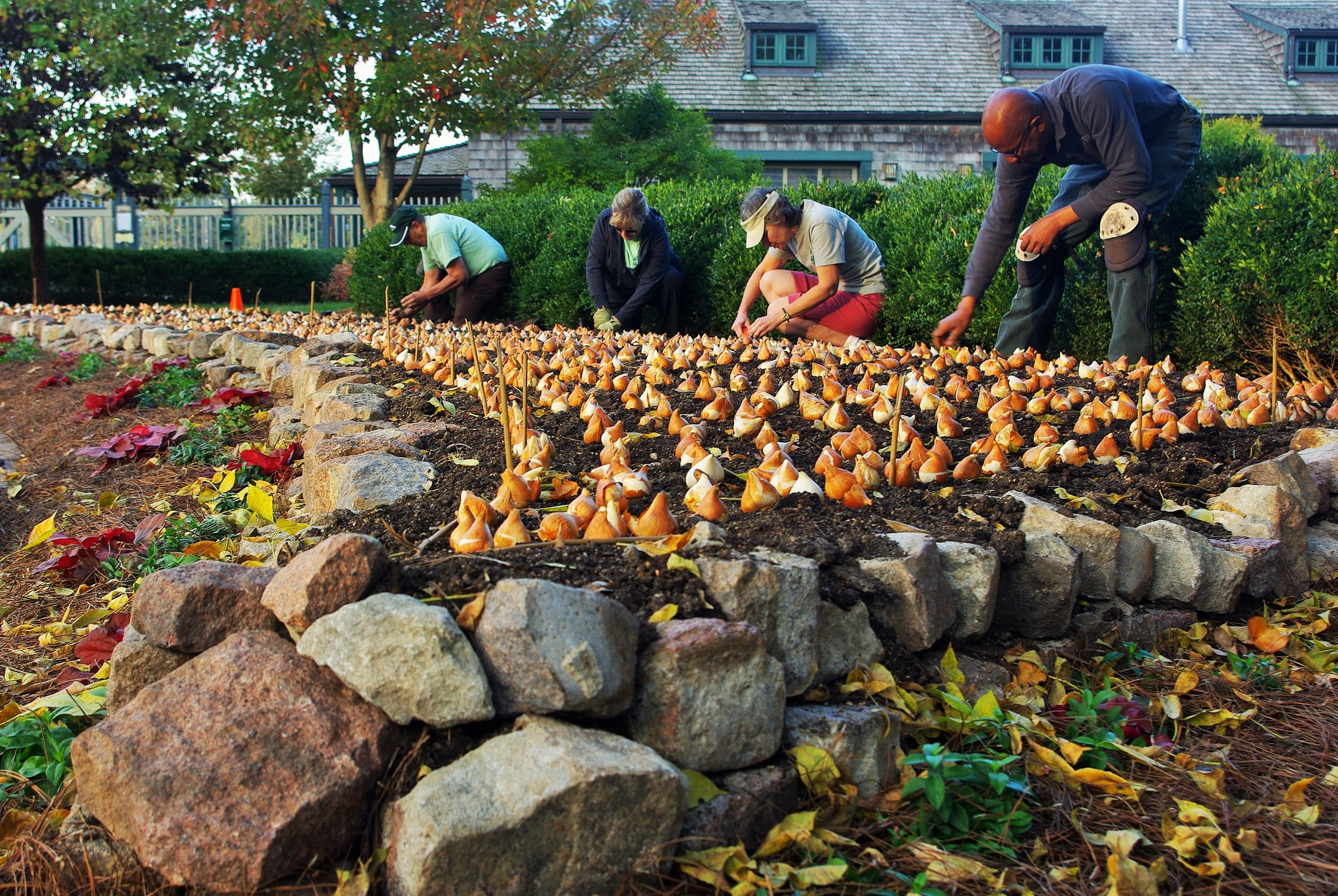 Forest Park Forever Gardener Eric H. (far right) works with volunteers to plant bulbs for the spring display at the Boathouse.