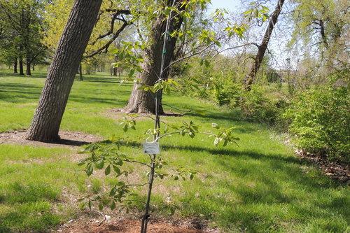 Tree Tributes