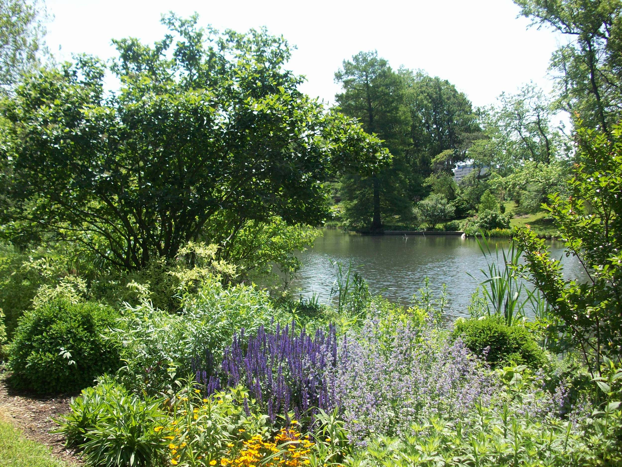 Murphy Lake in early summer, salvia and monarda blooming in a bed of perennials