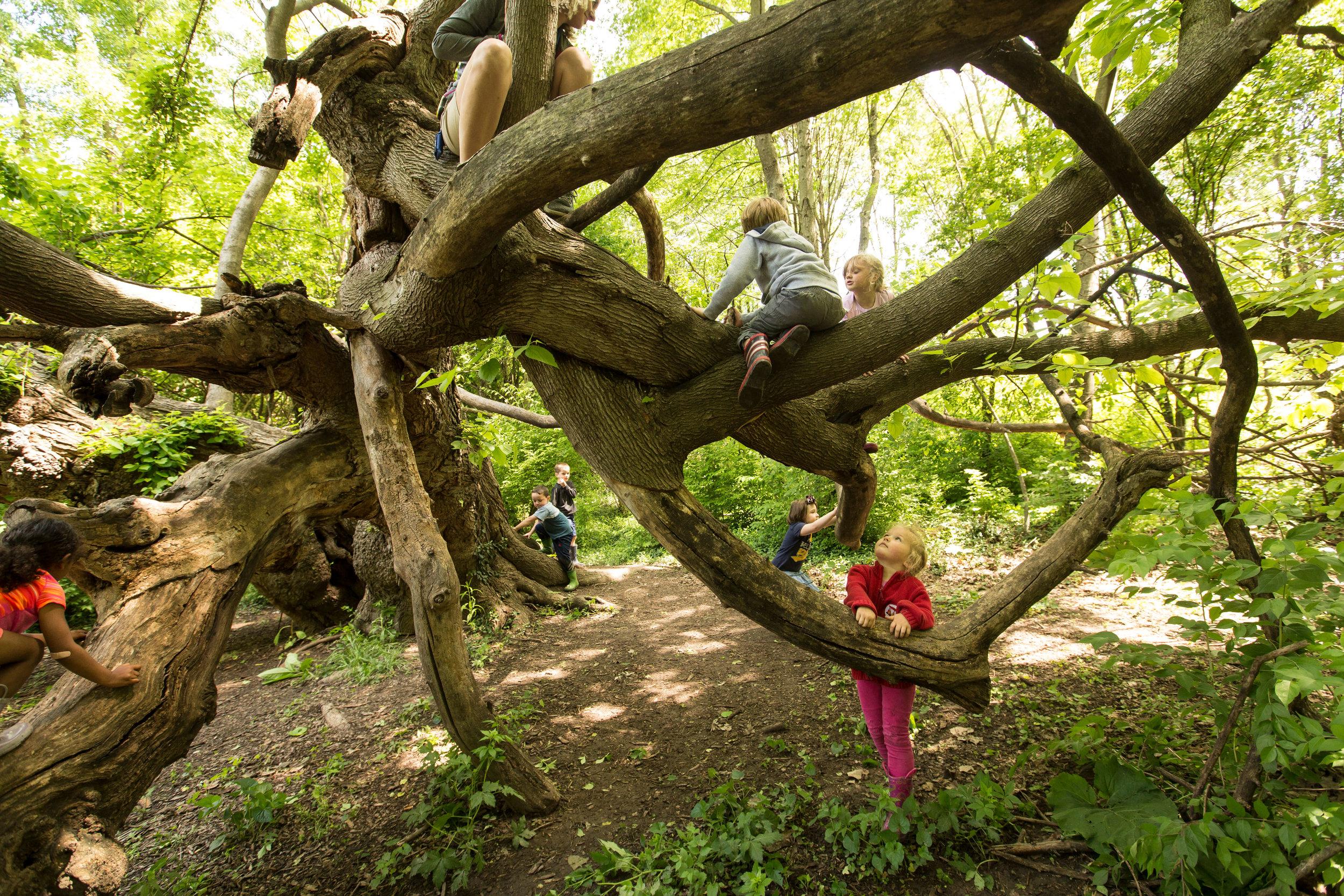 170512_naunheim_forest_park_forever_024.JPG