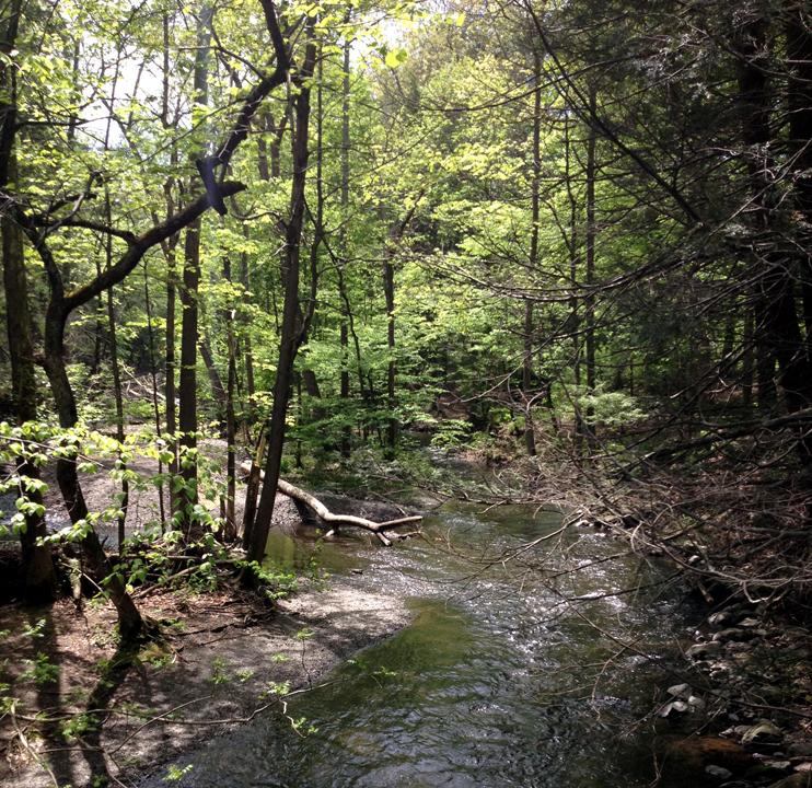 black-creek-preserve-kingston-weekender-ny-3.jpg