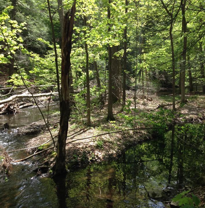black-creek-preserve-kingston-weekender-ny-4.jpg