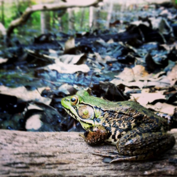 black-creek-preserve-kingston-weekender-ny-2.JPG
