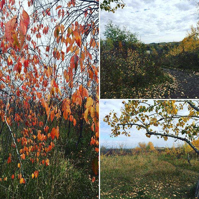 The #yeg rivervalley is gorgeous right now, but it won't be like this for much longer. Get your family photos before it's too late! ladyblack.ca #yegphotographer #yegphoto #shpk #yeggers #yeglocal #yegfall #iheartautumn #autumn 🍁🍂🎃