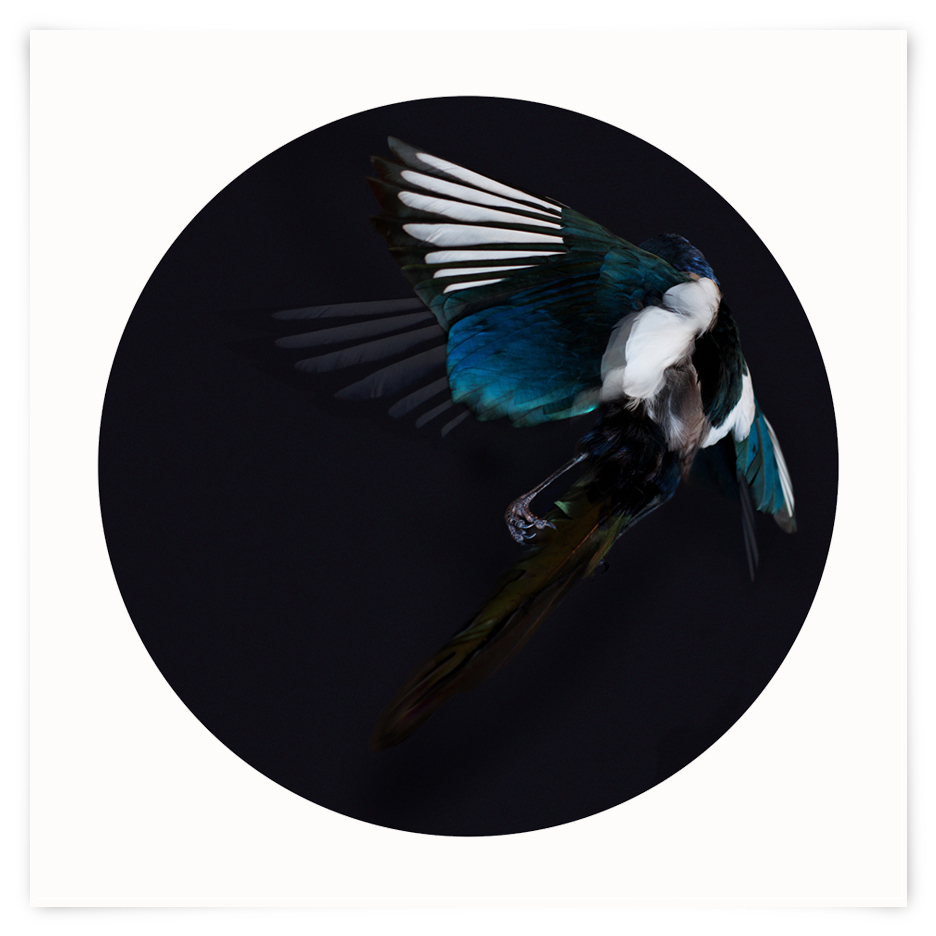 MAGPIE #1 - LIMITED EDITION OF 20
