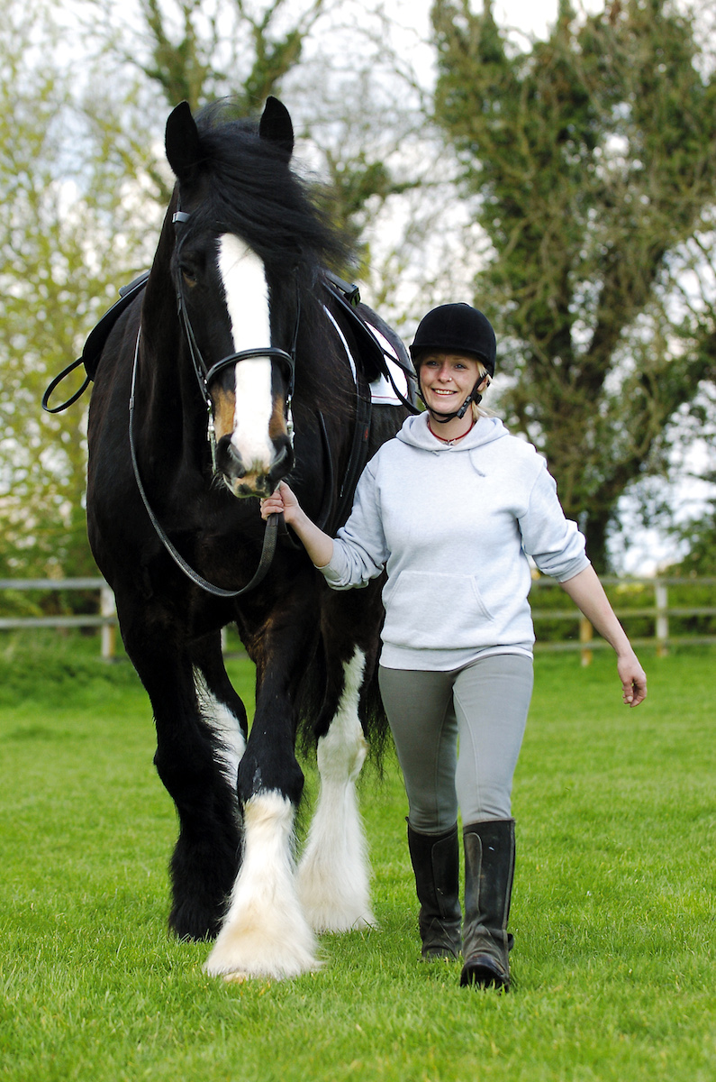 Cracker Tallest Shire Heavy Horse