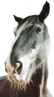 Cracker Horse 1 no border.jpg