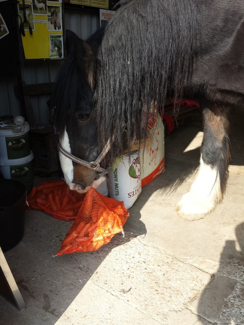 Letting his cheeky side out, playing with the bag of carrots.