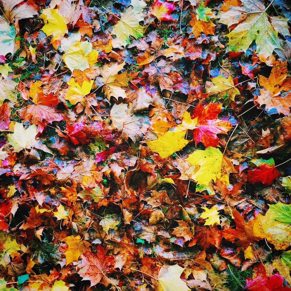 Autumn Season Leaves Canvas Print Artwork.jpg