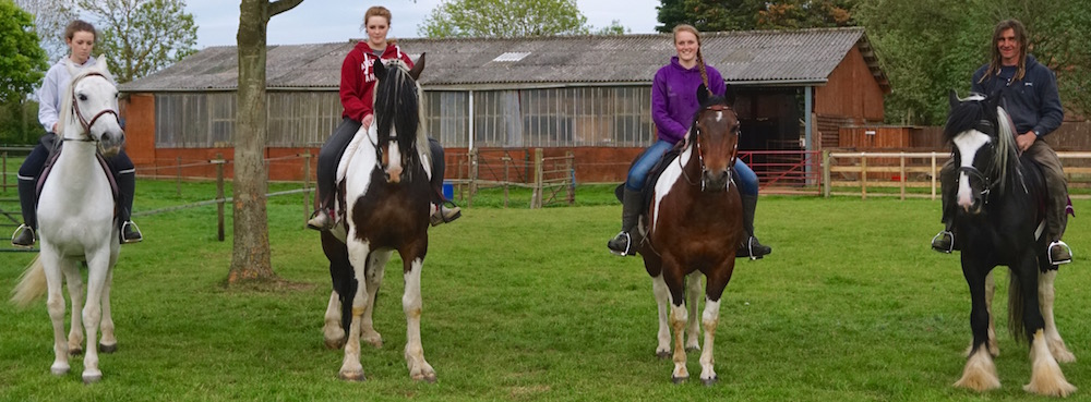 Horses at the Northcote Heavy Horse Centre - A rescue charity in Lincolnshire