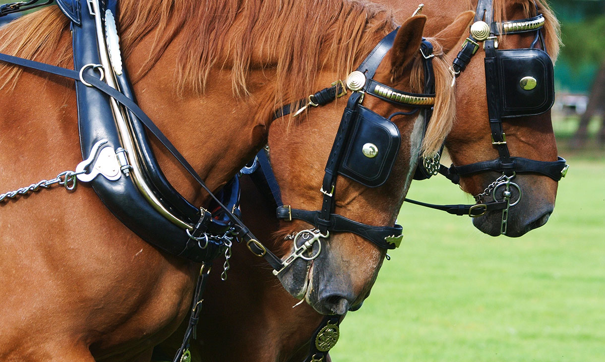 suffolk-punch-horses.jpg