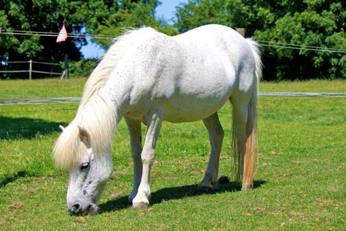 Lovell - Lovell is a Welsh Type pony.Unknown age.Grey coloured.12 Hands High.Find out more here...