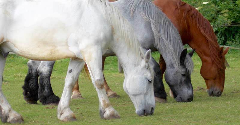 Help+horses+in+Lincolnshire-1.jpeg
