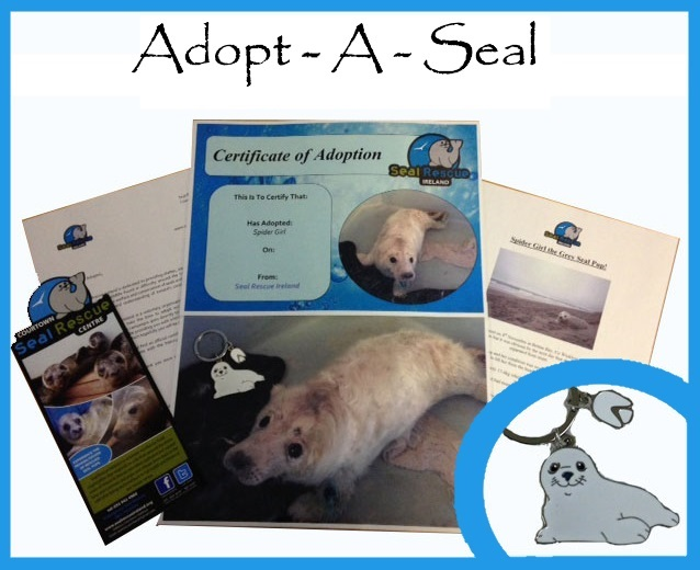 Adopt one or more seals and receive an adoption certificate, photographs and the seals' stories plus extras depending on the package you choose!