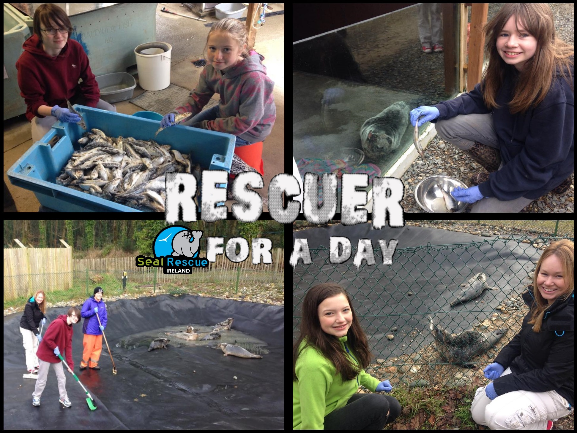 "Purchase a ticket for your loved one to our ""Rescuer for a Day"" program for a unique behind the scenes day at our centre where they will get hands on with the seals and be part of our team for the day! An Unforgettable experience!"