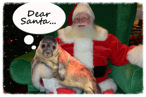 help the seals web.jpg