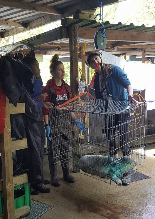Some of our volunteers weighing the newly rescued seal