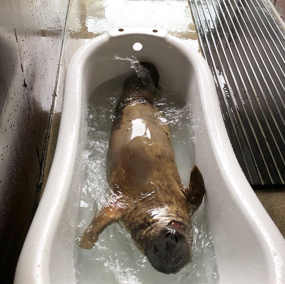 bath-seal.jpg