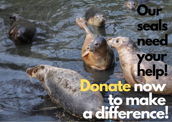 Donation Website.jpg