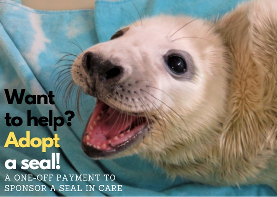 Want to help_ Adopt a seal! (4).jpg