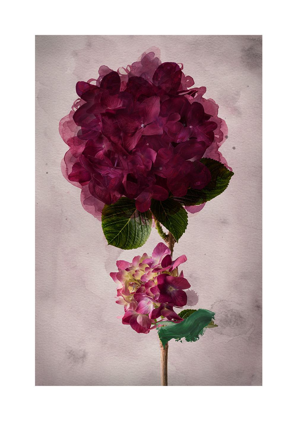 Vintage Bloom Limited Edition Print