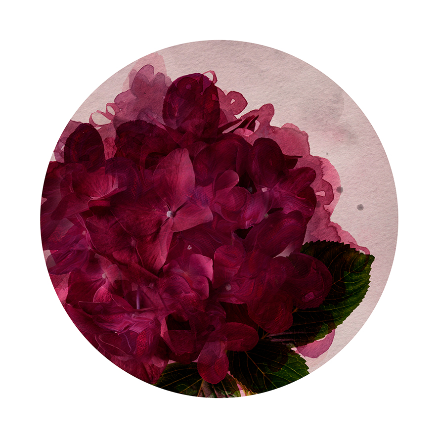 Vintage Bloom - Circle Detail - Limited Edition Print
