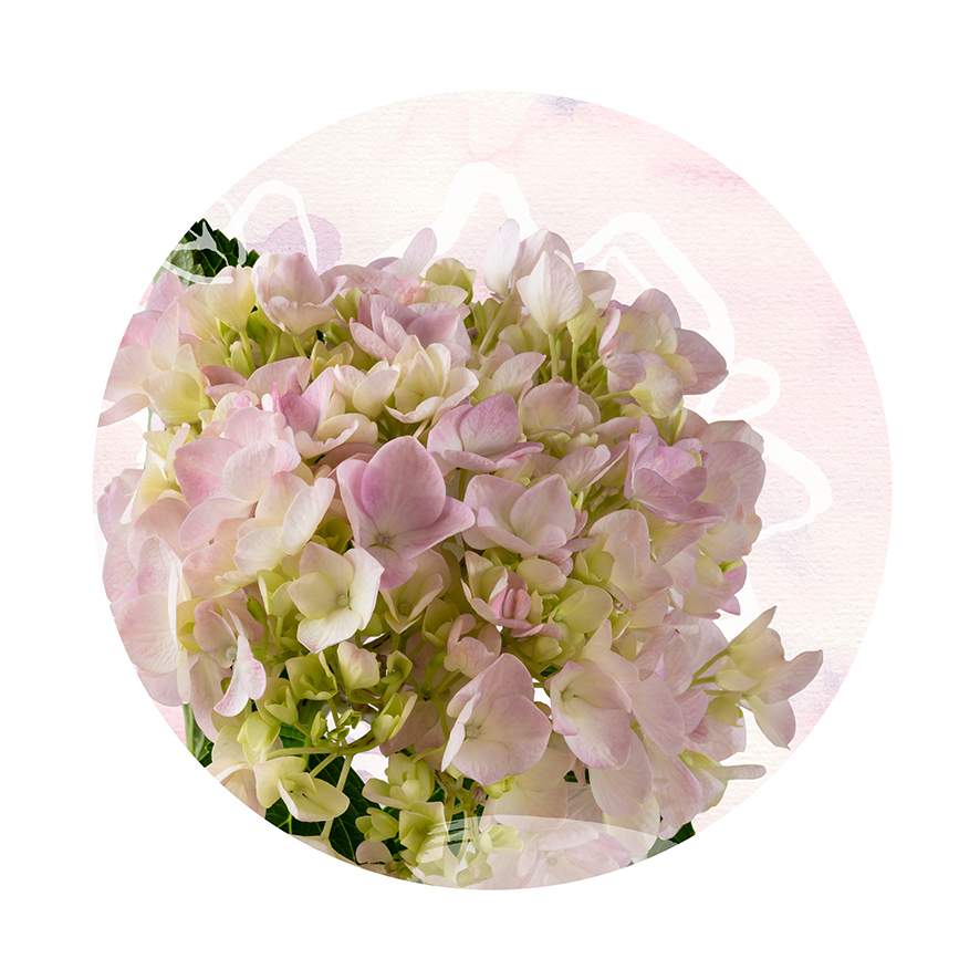Delicate Bloom - Circle Detail - Limited Edition Print