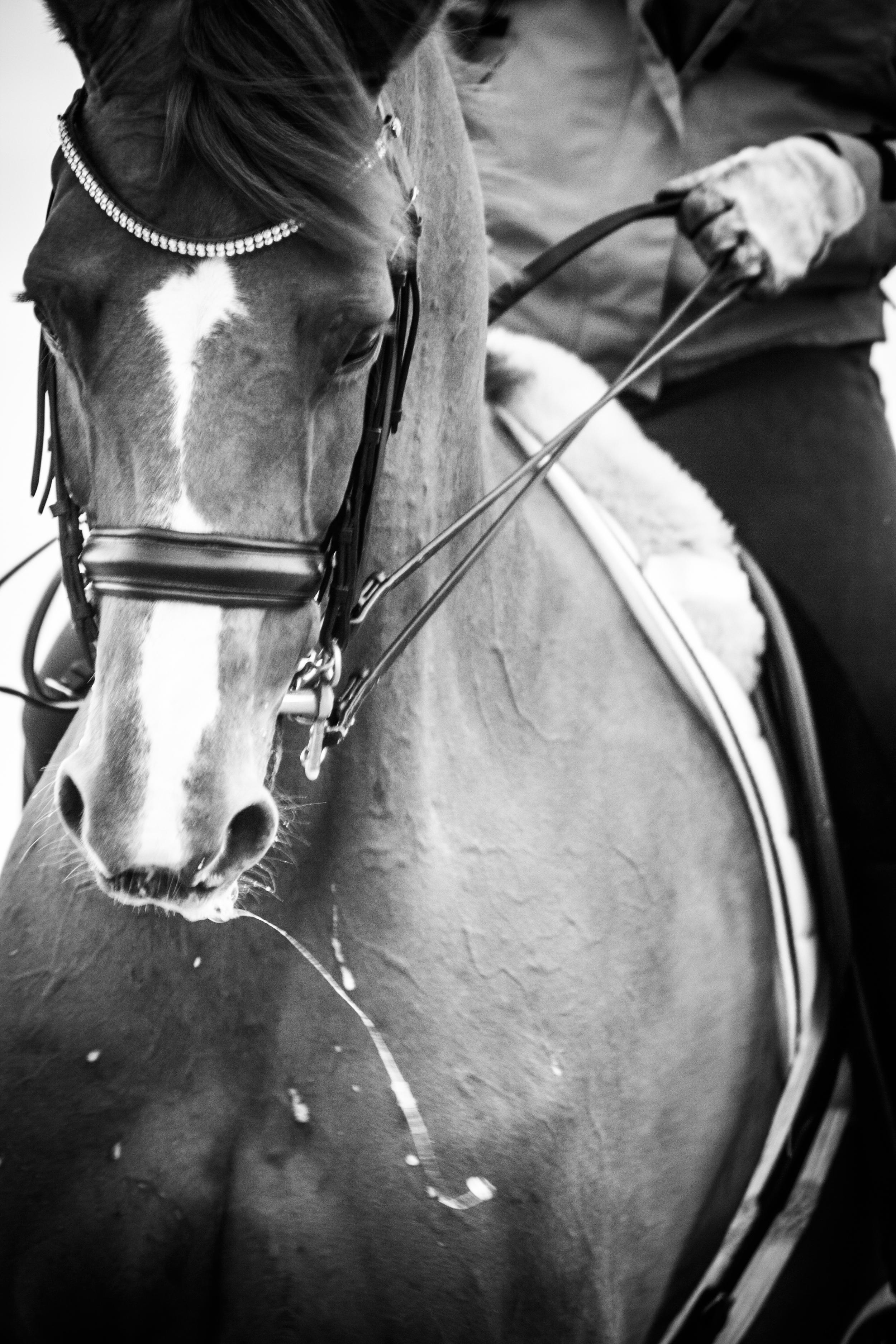 Ocala Horse Photographer