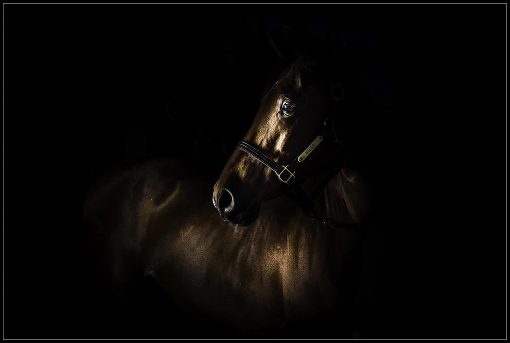 Horse Photography Pet Horse Photographer