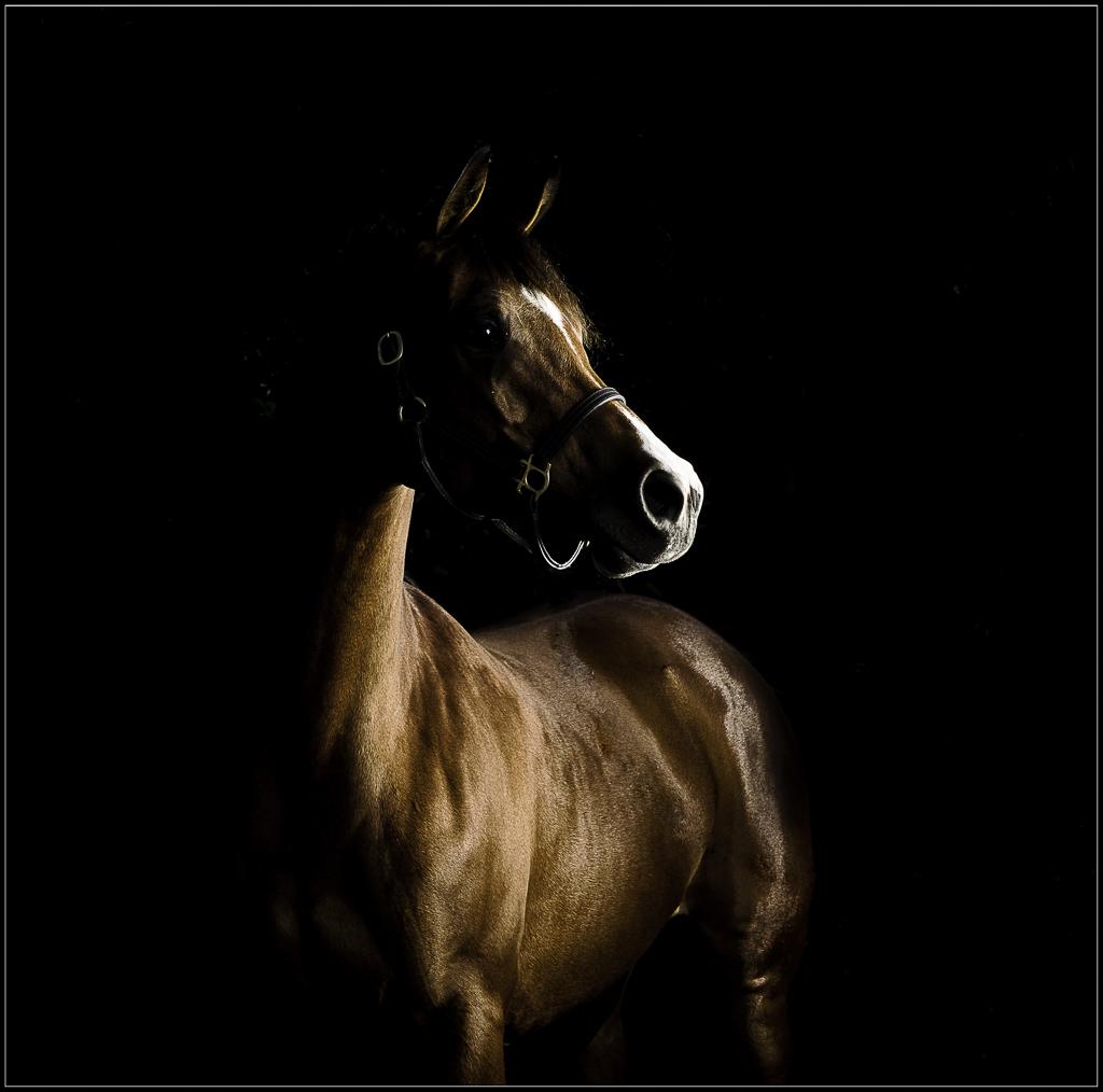 Horse Photographer Pet Horse Photographer