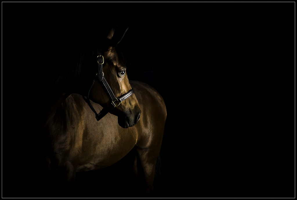 Equine Fine Art Photography