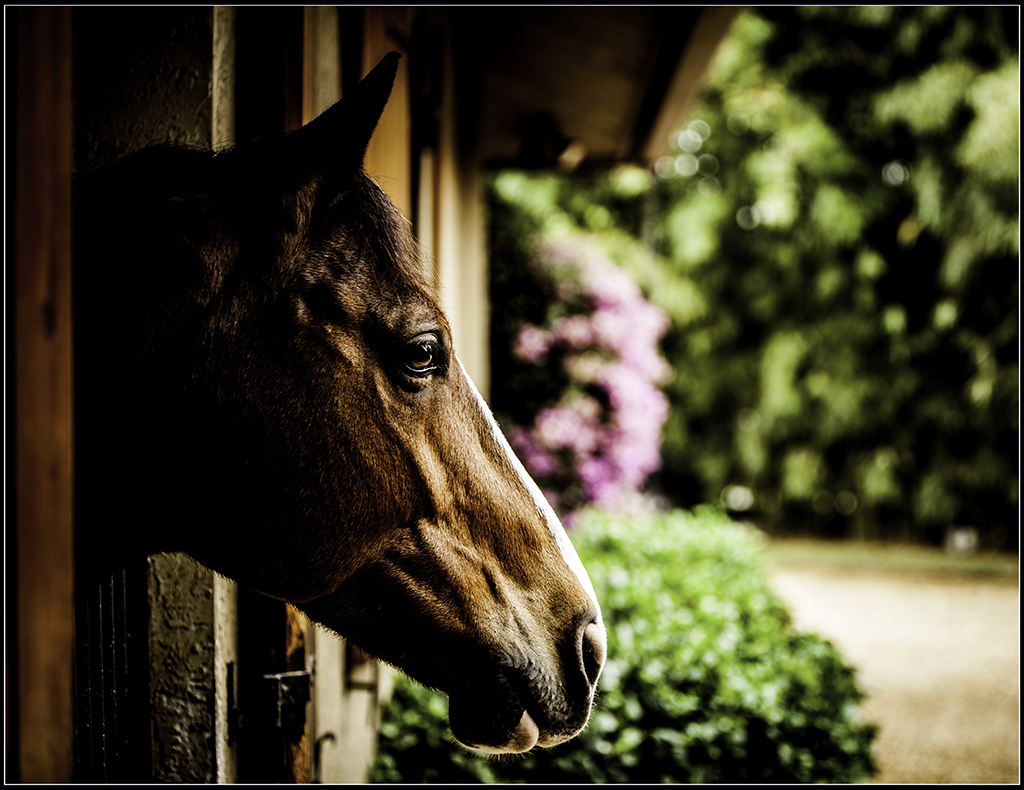 Horse Photographer Enrique Urdaneta