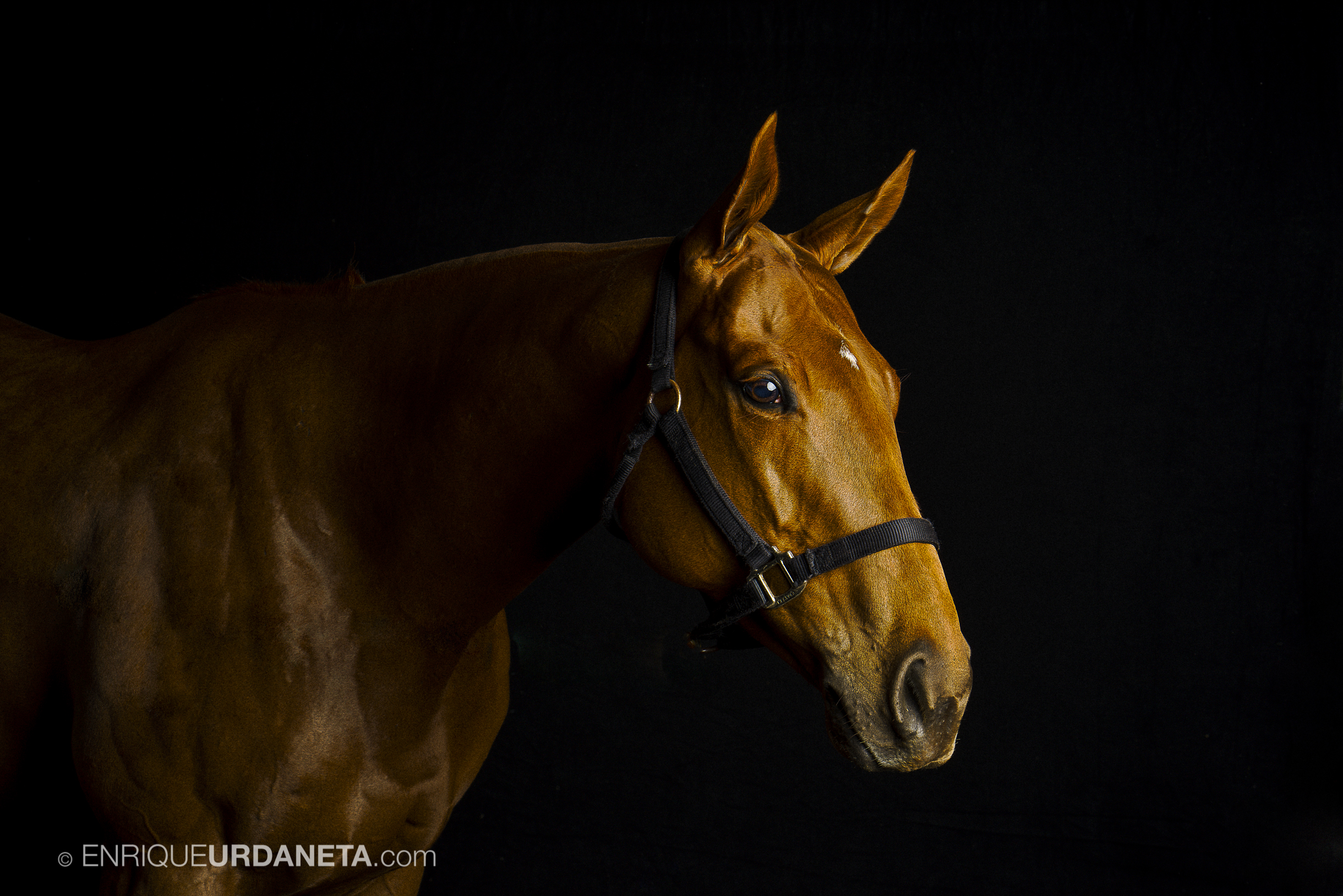 Equine Photographer Enrique Urdaneta