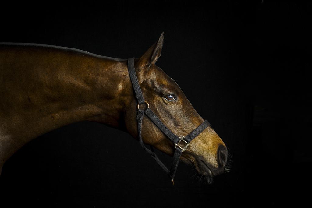 Equus_by_Enrique_Urdaneta-11.jpg