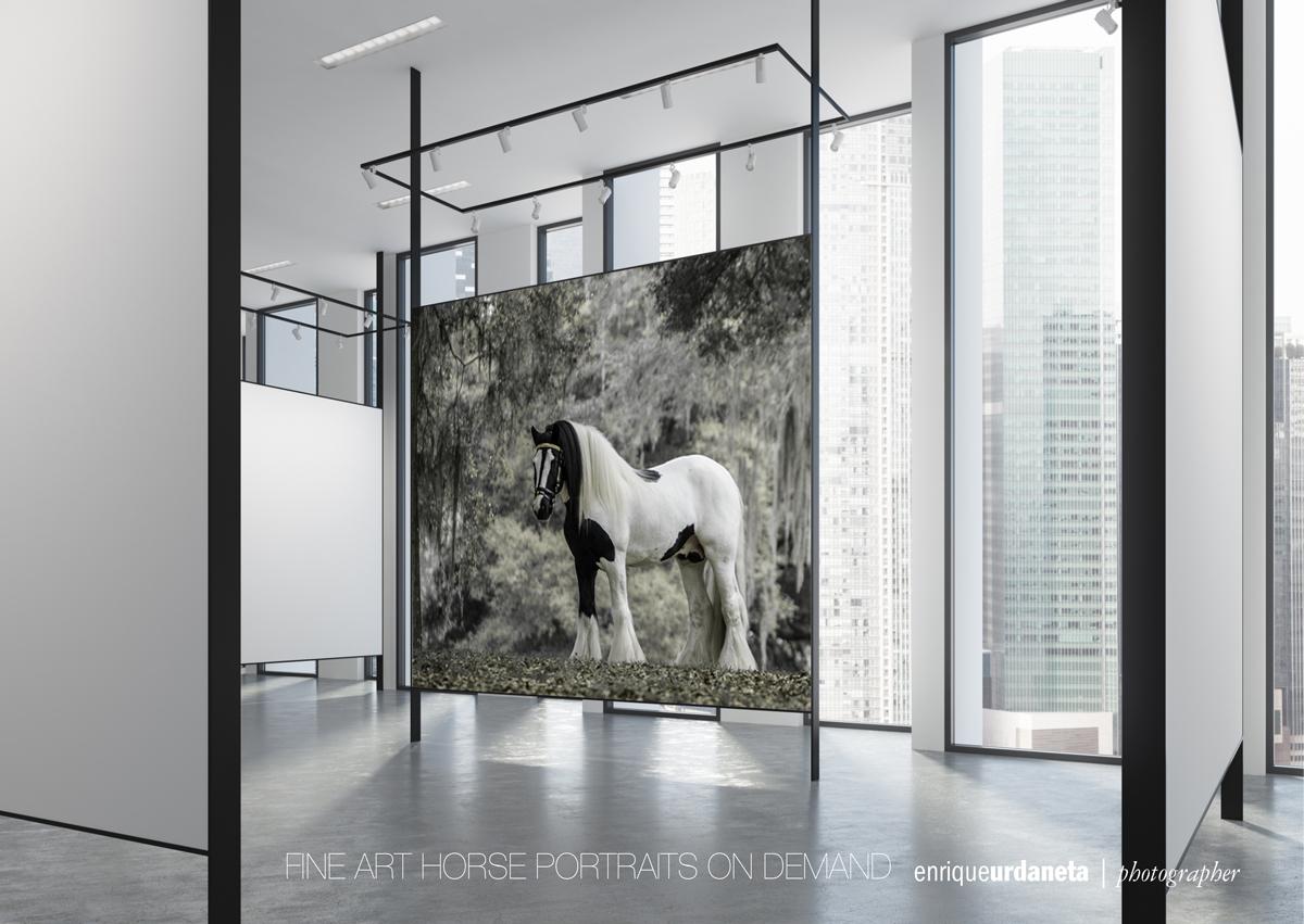 Equine-Photographer-Enrique-Urdaneta.jpg