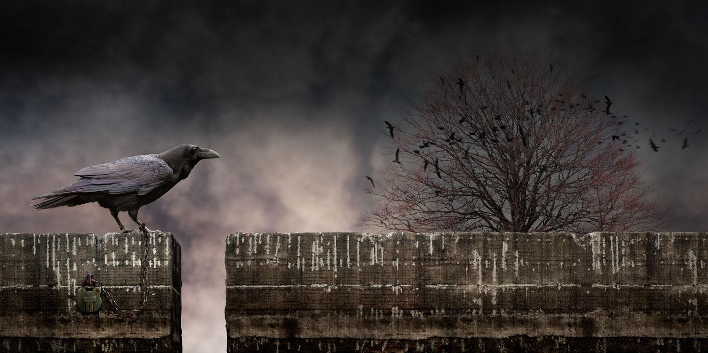 crow_sharp.jpg