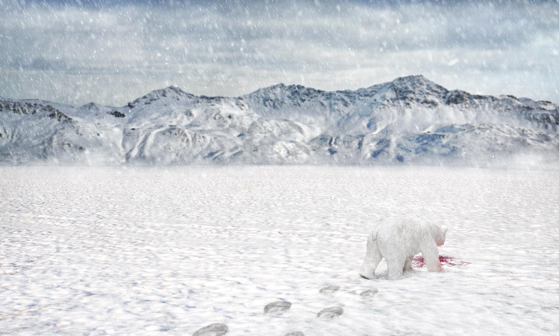 polar_bear_sharp.jpg