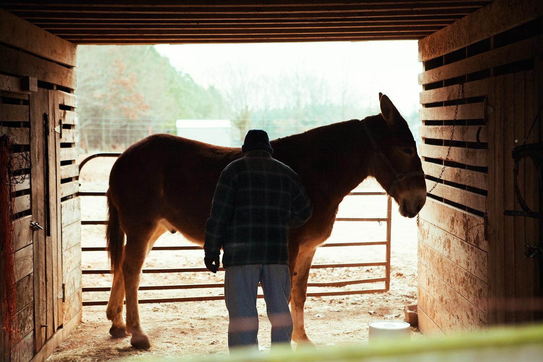Tim and his mule - Athens, Georgia