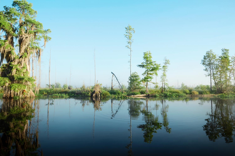 Okefenokee Swamp, GA
