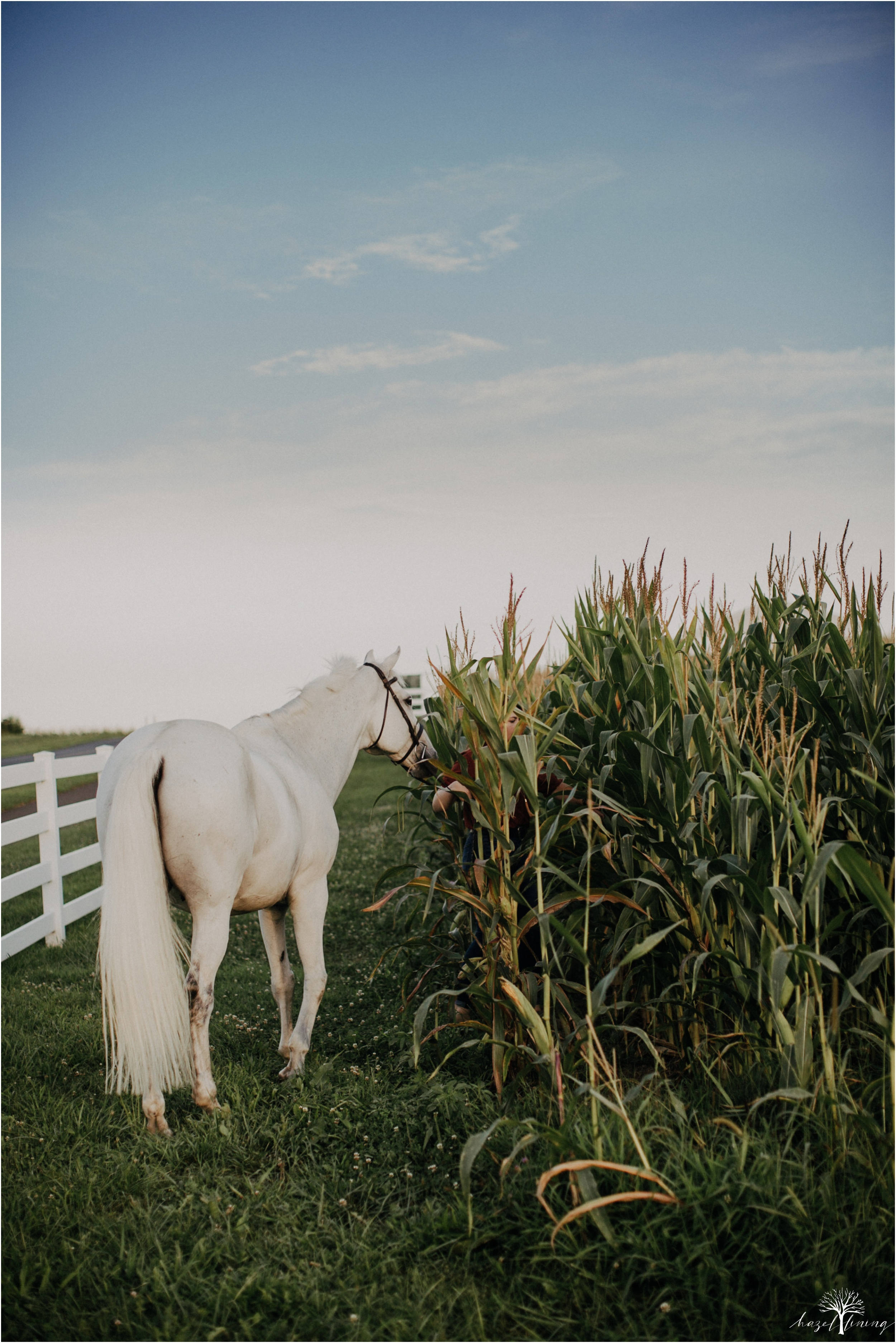 taylor-adams-and-horse-delaware-valley-university-delval-summer-equestrian-portrait-session-hazel-lining-photography-destination-elopement-wedding-engagement-photography_0027.jpg