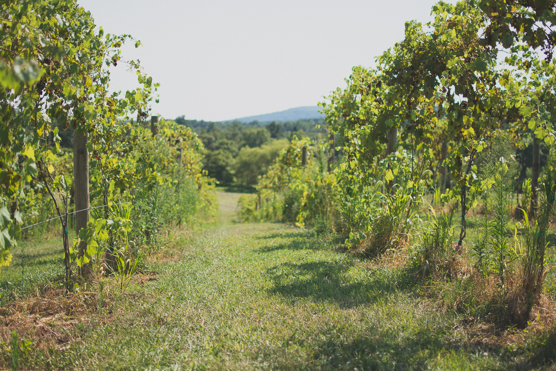 Springfield Manor Winery & Distillery Wedding Photo