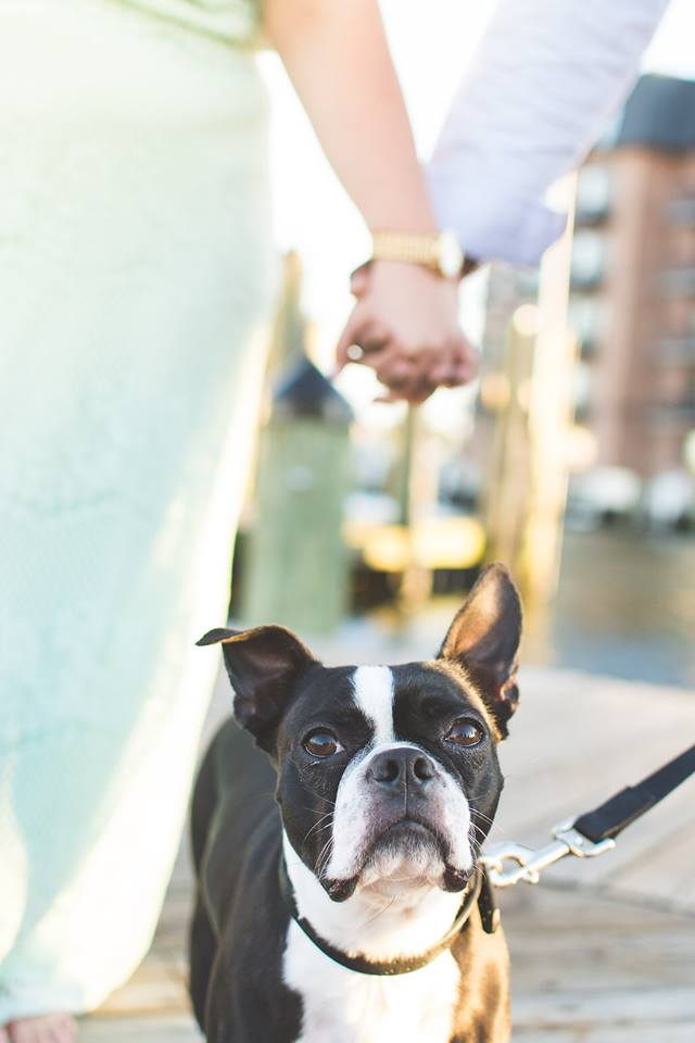 tips for bringing your dog to an engagement session couple photo